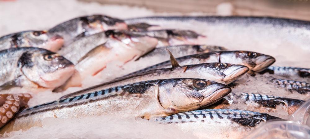 Fisch - Culinara - Villingen-Schwenningen
